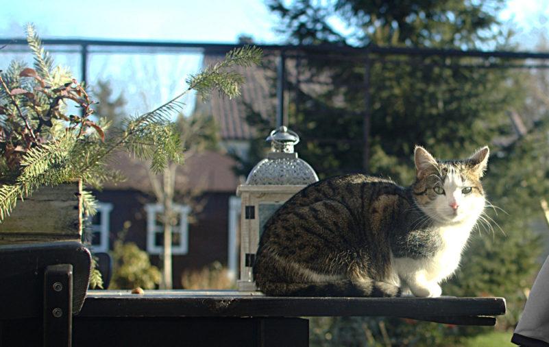 kot w ogrodzie na stole zimą