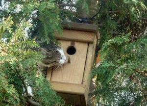 kot z budką dla ptaków, kot a budki lęgowe