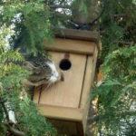 kot z budką dla ptaków