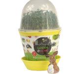 szklarenka jajko doniczka z podstawką i przezroczystą pokrywką z wywietrznikiem