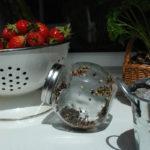 Kiełkownica słoikowa na kuchennym oknie