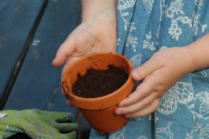 Gotowe posiane nasiona w doniczce.