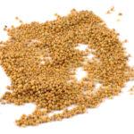 Proso żółte składnik mieszanek ziaren dla ptaków Semini