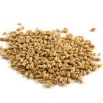 pszenica węglowodany składnik mieszanek dla ptaków Semini