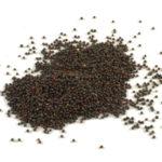 rzepik wysokoenergetyczny składnik mieszanki dla dzikich ptaków Semini