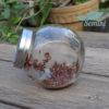 Kiełki czerwonej kapusty 2 dzień uprawy kiełkownica słoikowa Semini