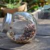 Dzień 4 hodowli kiełków kapusty czerwonej kiełkownica słoikowa Semini