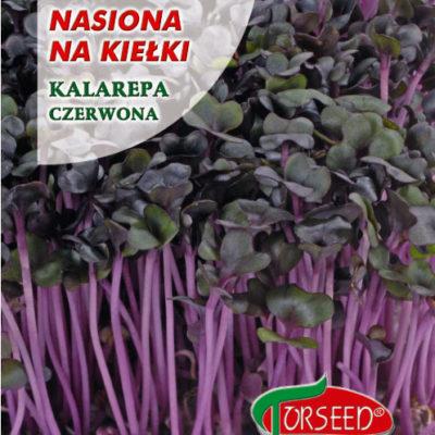 kalarepa czerwona nasiona na kiełki Torseed 10g