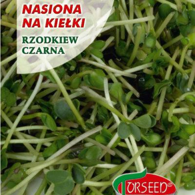 Nasiona na kiełki rzodkiew czarna Torseed 10g