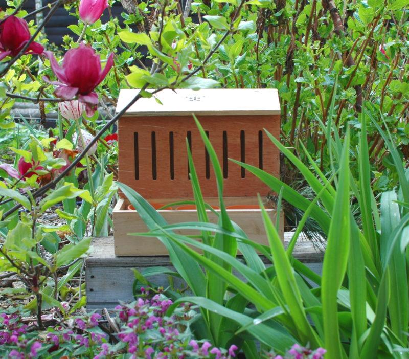 Domek dla motyli na rabacie wśród roślin