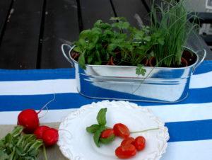 zioła organiczne w metalowej doniczce i pomidory