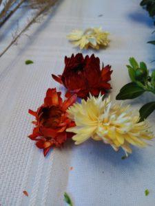 Kocanki ogrodowe mogą być ozdobą bukietów lub palmy wielkanocnej DIY