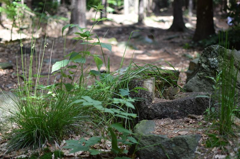 Dzika rabatka, minikrajobraz w ciemnym lesie.