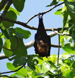 Nietoperz śpi na drzewie