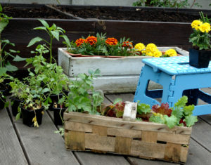 Rozsada warzyw i kwiatów