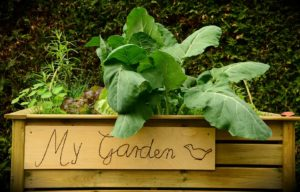 Podniesiona grządka to najprostrzy łatwy warzywnik