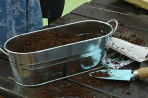 Zestaw do uprawy lawendy z nasion: wsypywanie podłoża do metalowej wanienki.
