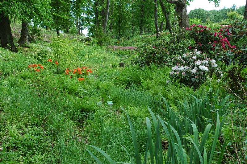 Fragment dużego założenia ogrodowego, pozostawiony bez opieki na kilka lat.