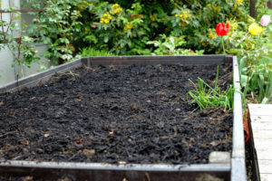 Przygotowane podłoże dla warzyw, pokryte ściółką z kompostu