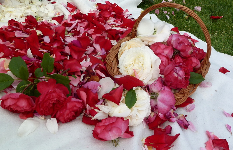 Kwiaty i płatki na Boże Ciało w wiklinowym koszyku