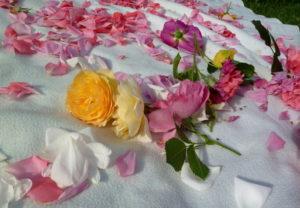 "Róże ""Graham Thomas', 'Winchester Catedral', 'Rosarium Uetersen', ""New Dawn' i ich płatki"