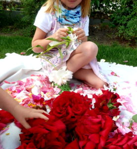 Skubanie płatków z róż, na pierwszym planie odmiana 'Ingrid Bergman'