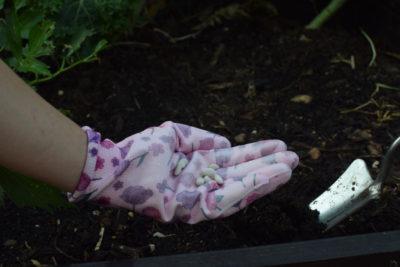 Nasiona fasoli, rękawice ogrodowe, łopatka ręczna