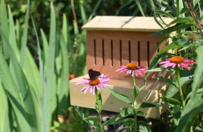 Po co domek dla motyli stawiamy w ogrodzie lub na balkonie
