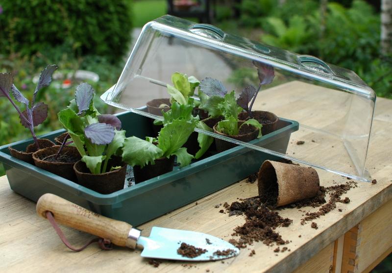 Miszklarenka i doniczki torfowe to zestaw do produkcji rozsady.