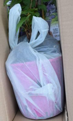 Zabezpieczona na czas przesyłki doniczka z rośliną.