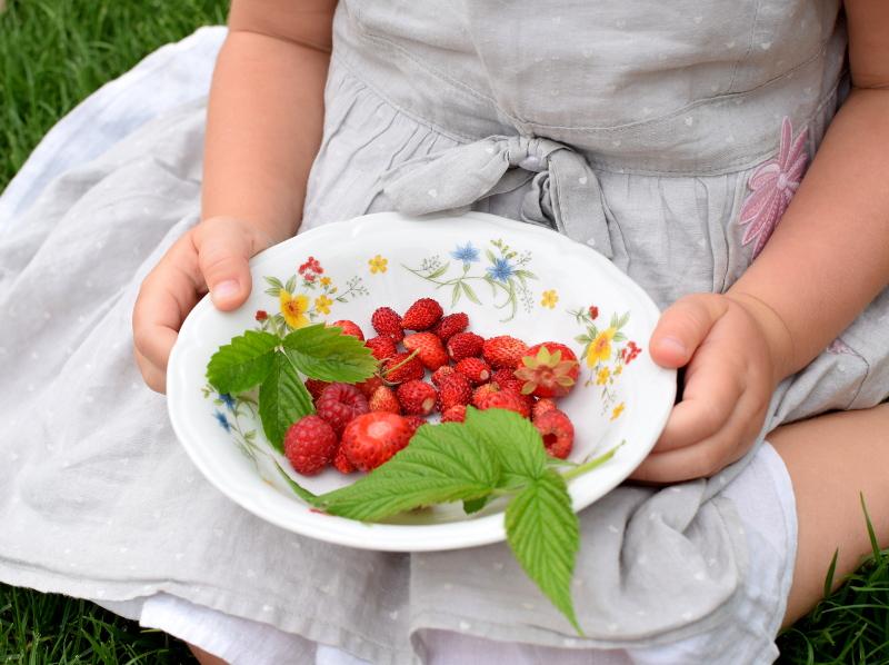 Zbiory owoców z ogrodu: poziomki, truskawki, maliny