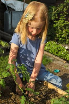 Sadzenie pomidorów w odpowiedniej glebie