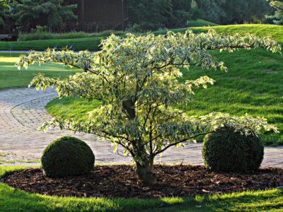 Utwardzanie powierzchni w ogrodzie nie jest dobre dla drzew