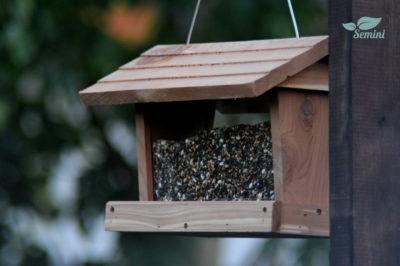 Poszukujemy blogerów do testów ptasich pokarmów