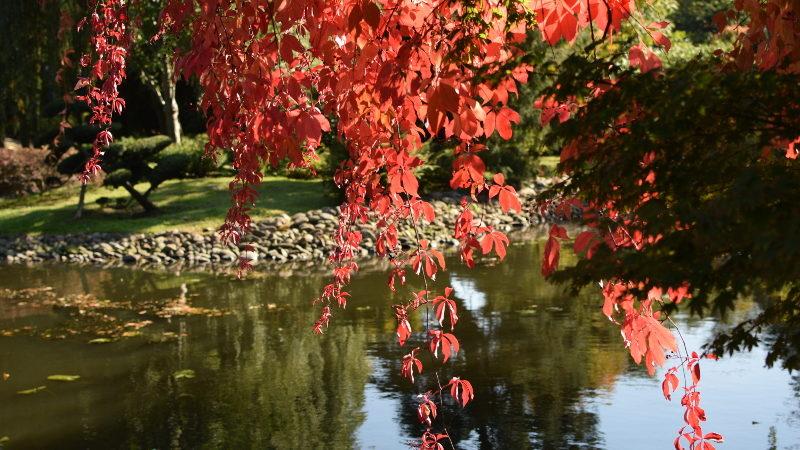 Co trzeba zrobić w ogrodzie jesienią? 1
