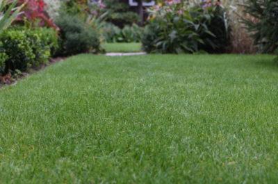 Trawnik jak dywan, kto by takiego nie chciał?