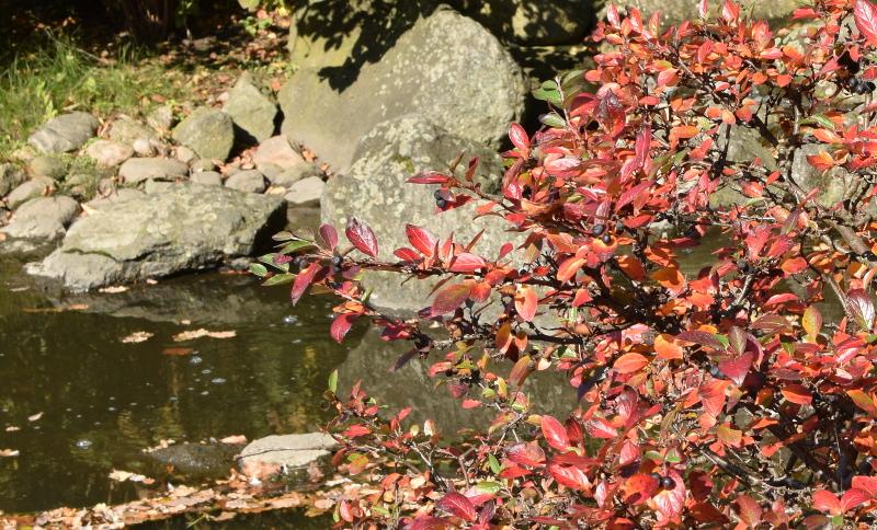 Przebarwione liście, owoce, woda - oto przepis na piękną jesień w ogrodzie.