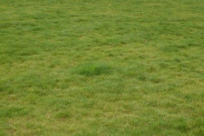 Nierówny trawnik to efekt kiepskich nasion