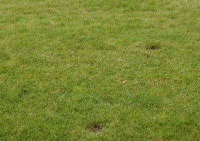 Ubytki w trawniku