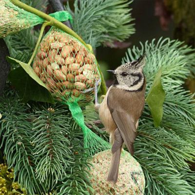 Sikora czubatka w zimowym raju: ptaki zimujące uwielbiają orzechy, kule tłuszczowe, słonecznik...