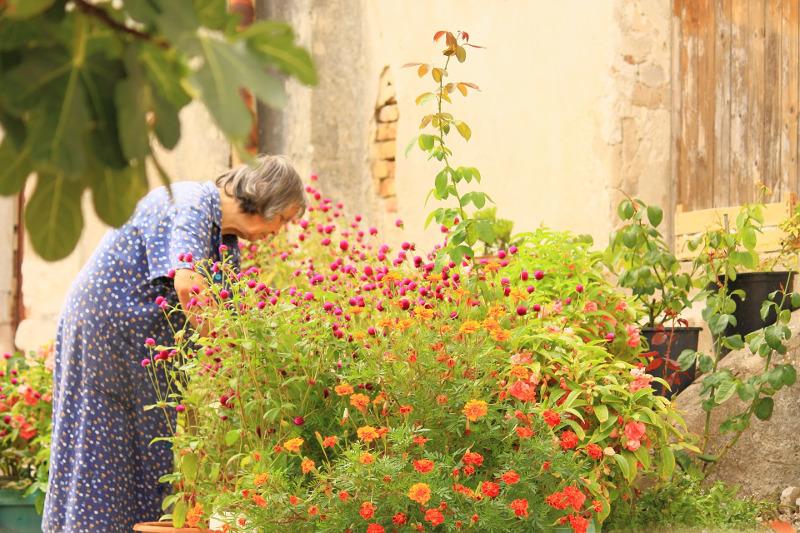 Starsza Pani w ogrodzie