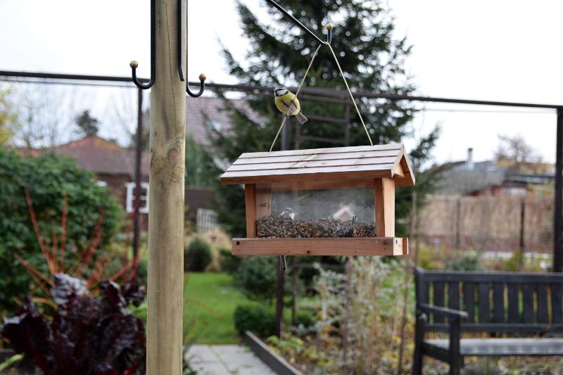kot przy karmniku dla ptaków