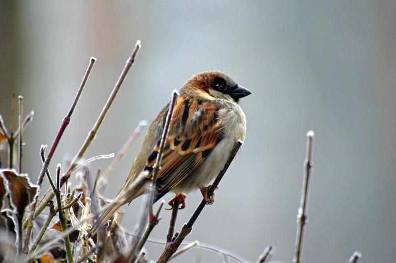 Ptaki Zimujące W Polsce Które To Gatunki Co Jedzą Zimą Semini