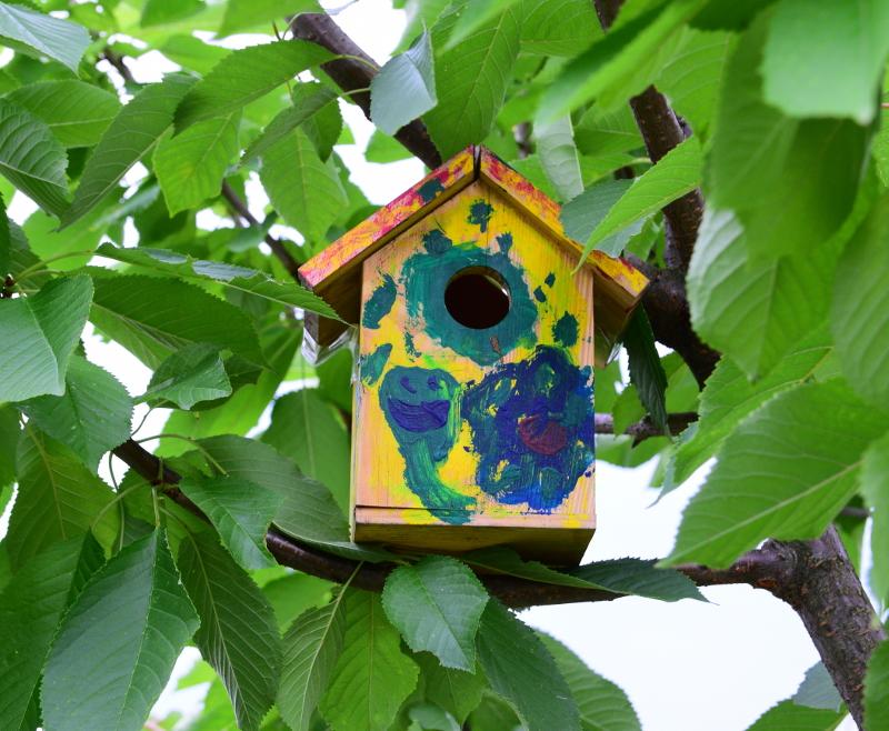Pomalowany domek dla ptaków na drzewie latem