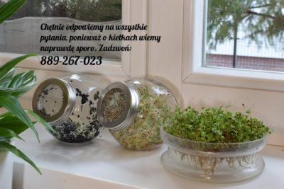 Kiełkownice szklane różne rodzaje