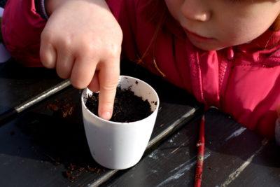 Nasiona ziół należy wcisnąć w wilgotne podłoże