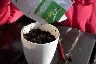 Wysiewanie nasion ziół kuchennych do doniczki magnetycznej