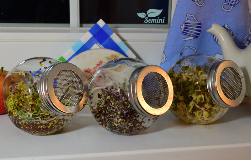 3 słoiki na kiełki aranżacja na oknie z logo Semini