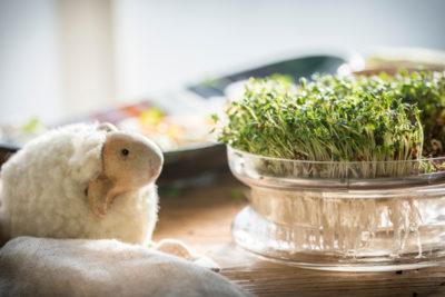 Kiedy posiać rzeżuchę na Wielkanoc - oby jak najszybciej!