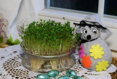 Rzeżucha na Wielkanoc z zajączkiem zrobionym z szarej skarpety.
